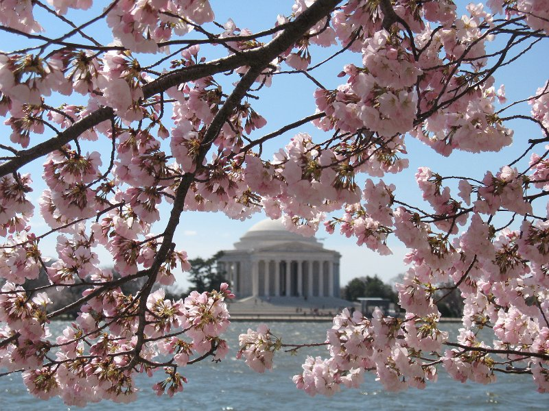 Tourism Cherry Blossom Viewing Map For The National Capital Region