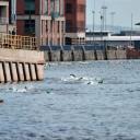 2013 WPFG - Triathlon - Belfast Northern Ireland (401)