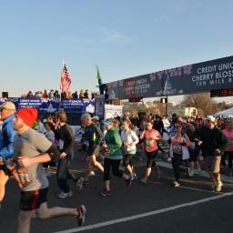 2013 Cherry Blossom 10 Mile Run
