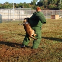 "Here are the most important changes which serves to even the playing field. Basically each competitor must compete with the dog they use at work and not have the unfair advantage of using another officer's dog. <br /><br />""A police dog shall be defined as a dog on regularly daily scheduled duty with the police organization of any unit of government, municipal, township, county, state or federal. The Police Service Dog may have been professionally trained but must be handled by the law enforcement officer to whom the dog is assigned to for deployment on a daily basis. Each handler is limited to competing with one (1) dog.""<br /><br />I have already had questions about crossed trained dogs. You may enter your dog into any event he/she has been trained in. I don't know if anyone works a bomb dog and a Patrol dog. If you do, and they both are your normal assigned dogs to work on duty, you may enter both dogs. Trainers are not permitted to enter the competition with dogs they do not personally deploy in a law enforcement capacity on a routine basis.  <br /><br />I know some of these changes will not be popular, but they are done in the name of fair competition. <br /><br />Any questions or concerns please get with me. If I don't respond to a post within a day, email me at joseph.furman@fairfaxcounty.gov"
