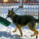 We still have snow here in Fairfax. Leave it to the K9s to get things back in order.