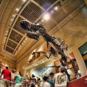 A little bad news: The infamous Smithsonian Dinosaur Hall is closing until 2019 for a major renovation. T-rex won't be at our Games. The rest of the National Museum of Natural History will remain open. The museum is one of the most popular for tourists visiting Washington, D.C.